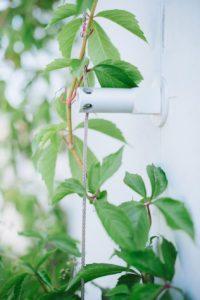 Jardines verticales y muros vegetales
