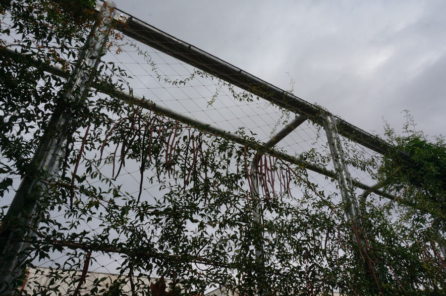 Malla de cable-muro vegetal-X-TEND