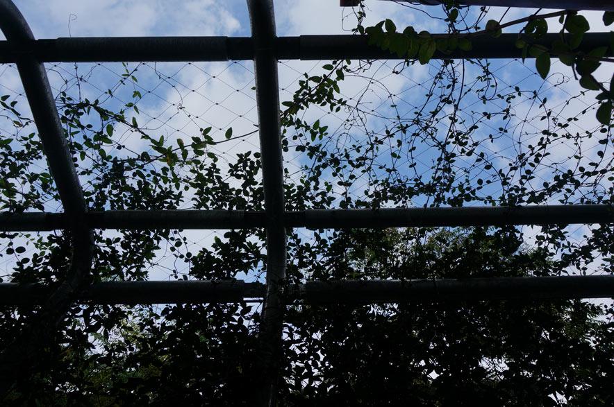 Malla de cables-muro verde